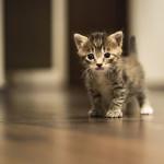 cat103