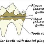 dentalpet2
